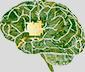 PCBs inside Head